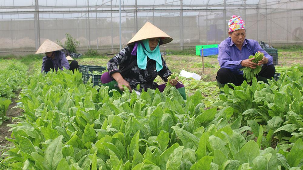 Xã Cảnh Thụy: Nâng chất lượng các tiêu chí nông thôn mới